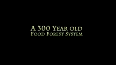 Photo of 300 Year Old Food Forest