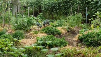Photo of How to Establish a Small Space Intensive Food Garden