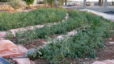 Photo of Jordan Valley Permaculture Project – November 2010 Update