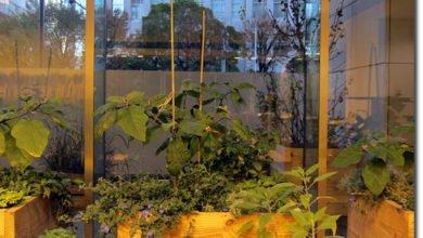 Photo of Indoor Farm in Tokyo