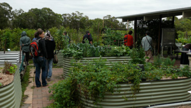 Photo of Community Gardens Visited and Observed: Veggie Village in Peregian Beach