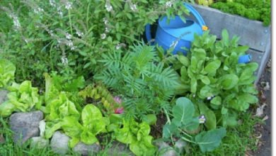 Photo of Cecilia's 13 Steps to Creating Beauty in the Permaculture Garden