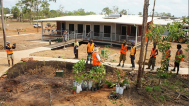 Photo of Permaculture at Wadeye – an Aboriginal Community in the Northern Territory, Australia