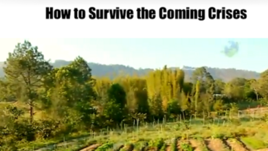 Photo of How To Survive the Coming Crises (free Geoff Lawton video)