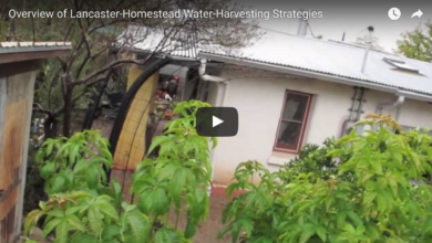 Photo of Overview of Brad Lancaster Homestead Water-Harvesting Strategies (Arizona)