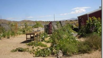 Photo of Small Scale Nursery Applications: Reflections from Loping Coyote Farms Nursery (NV, USA)