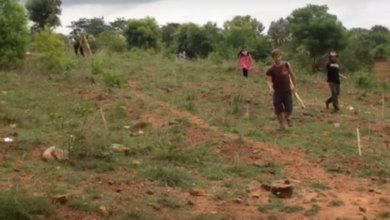 Photo of Three-Month Site Transformation of Degraded Land (Bangalore, India)