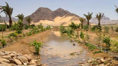 Photo of Desert Food Forest and Organic Commercial Production in Three Years – Update on Wadi Rum Consultancy (Jordan)