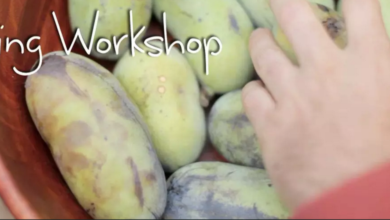 Photo of Edible Forest Garden Tasting Workshop (video)
