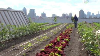 Photo of Brooklyn Grange: A Rooftop Farm in New York (video)
