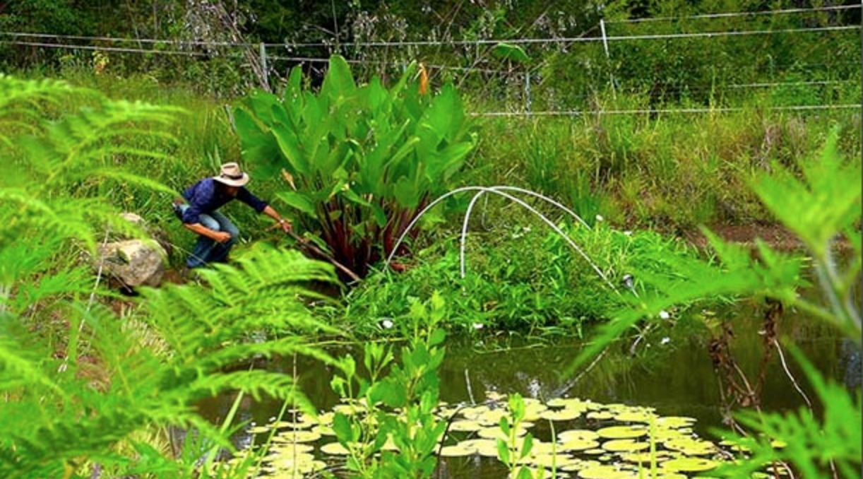 Photo of The Perfect Permaculture Fish Pond
