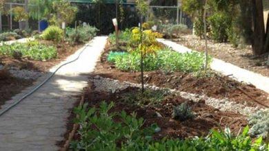 Photo of Nour Al Barakah – Planting a Sense of Community (Amman, Jordan)
