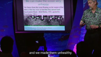 Photo of Stephen Palumbi: The Hidden Toxins in the Fish We Eat (TED video)