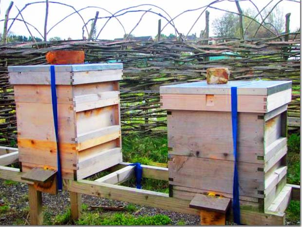 Bees-Hives-Flowers-Honey
