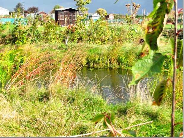 Pond-New-Shoots_