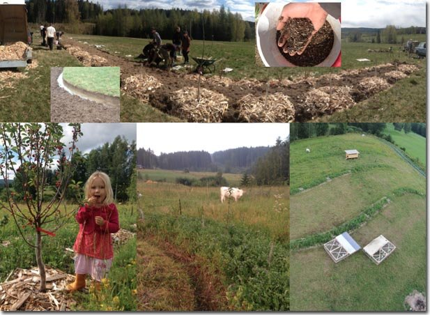 Setting-Permaculture-Farm-14