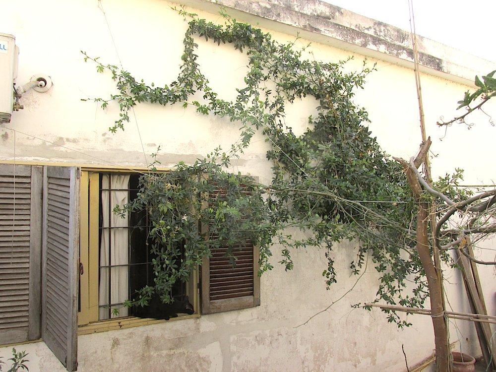 09 - pasionaria en la pared casa huerta small