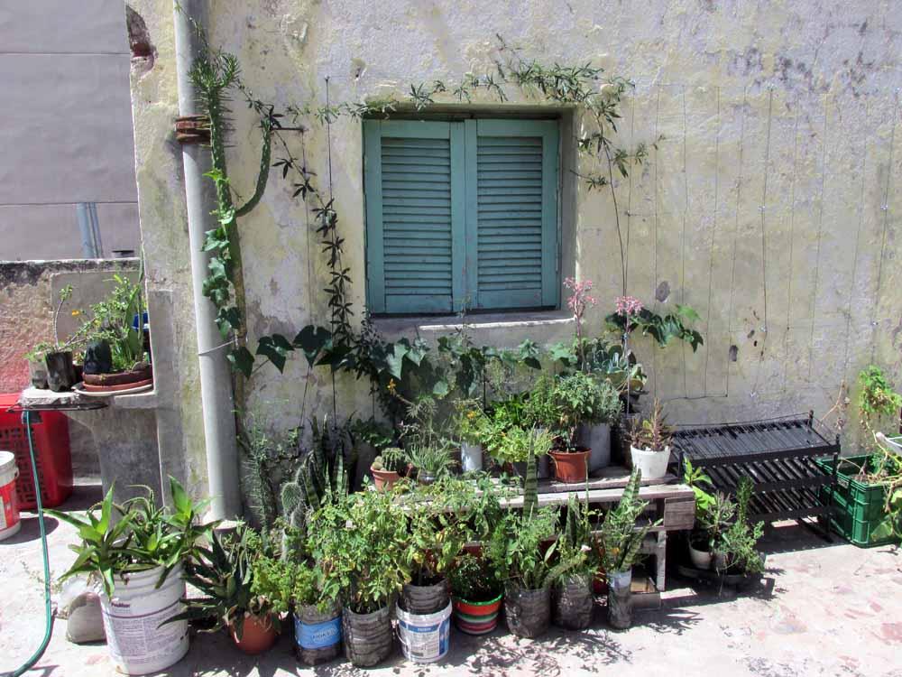 11 - guadalupe update permacultura deptos 2 de enero 2015 pasionaria terraza - 01 - SMALL