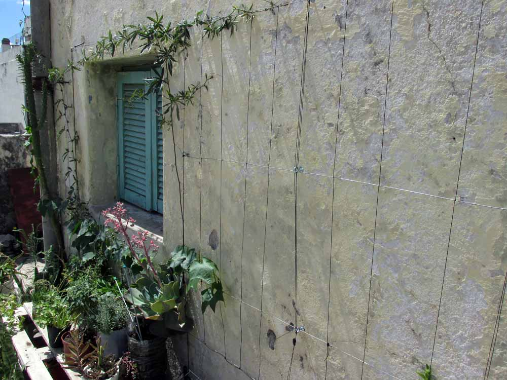 12 - guadalupe update permacultura deptos 2 de enero 2015 pasionaria terraza - 06 - SMALL