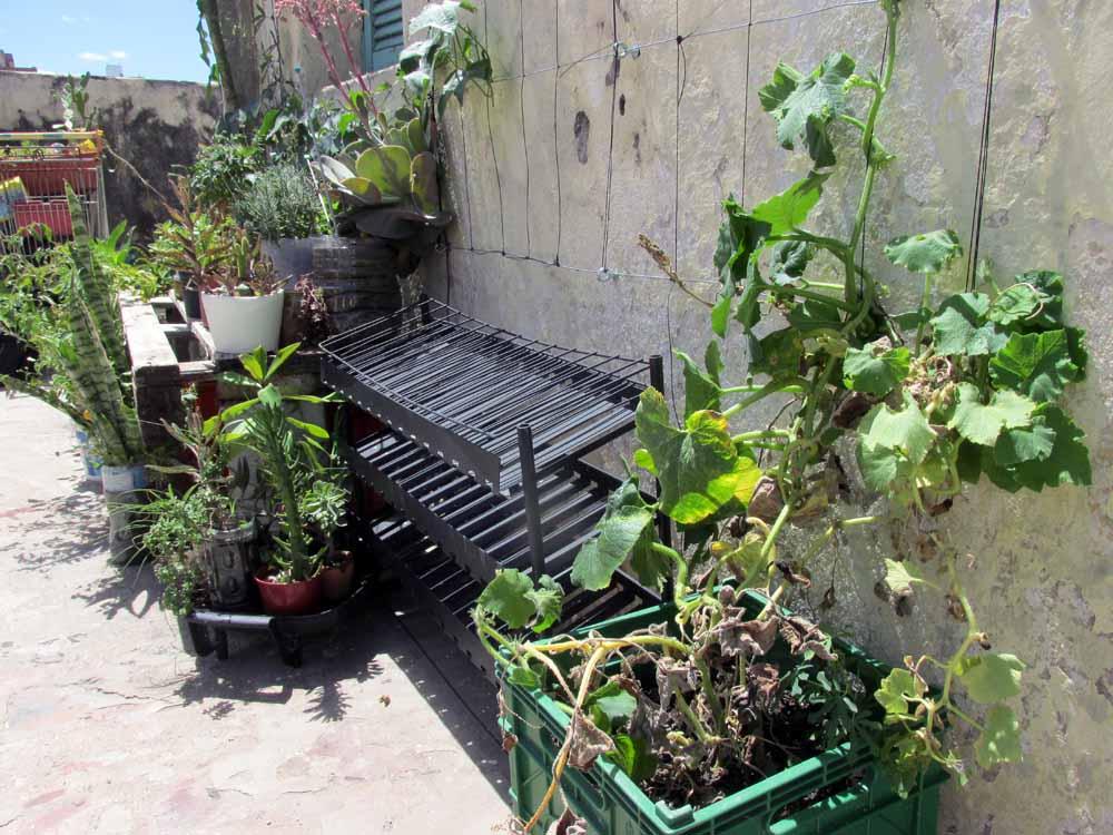 15 - guadalupe update permacultura deptos 2 de enero 2015 pasionaria terraza - 05 - SMALL