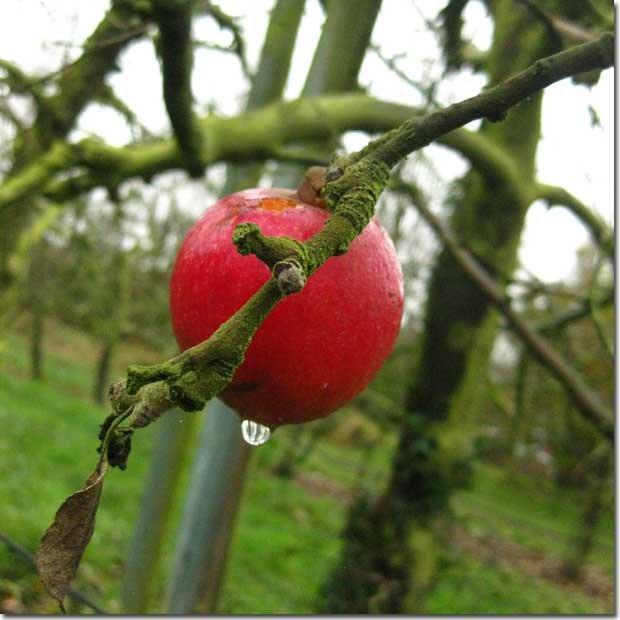 beauty-orchard-Haworth