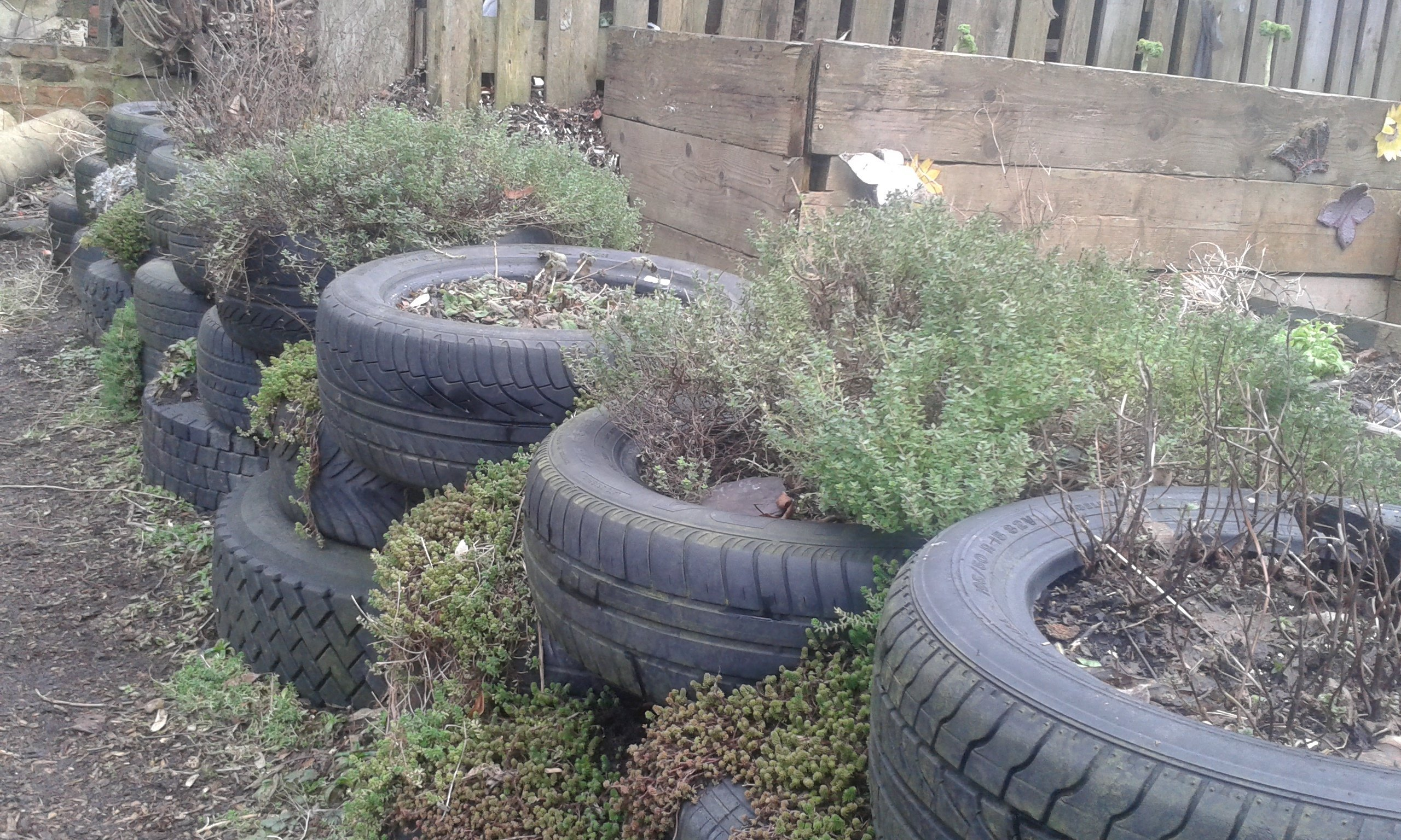 thyme-in-tyre