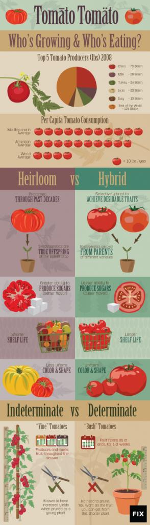 tomato-embed-small