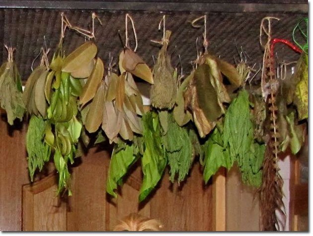 Drying-Leaves-for-Medicinal-Teas