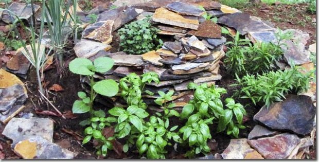 Mixed-Herbs-Spiral-Old-Section