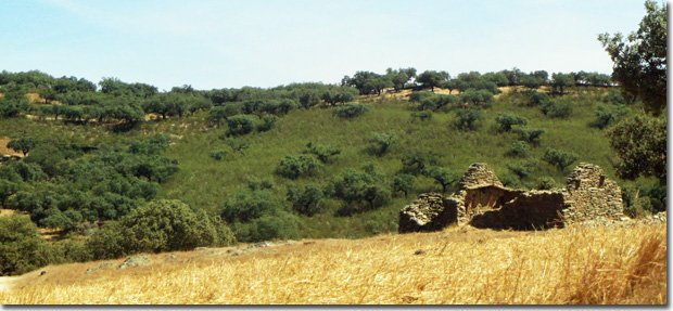 Restoration-Agriculture-Systems-ea3