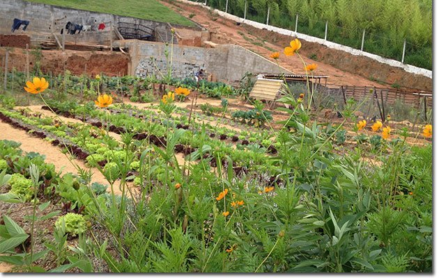 Therapeutic-Permaculture-11