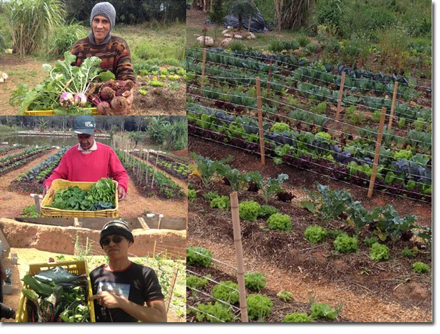 Therapeutic-Permaculture-5