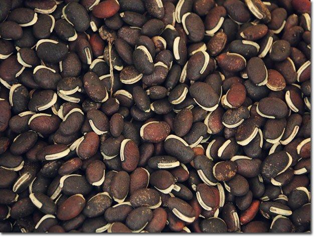 Seeds-ZF