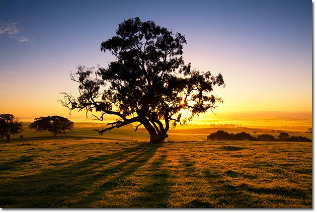 Tree-DeGrowth