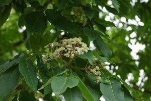 Bee Bee Tree
