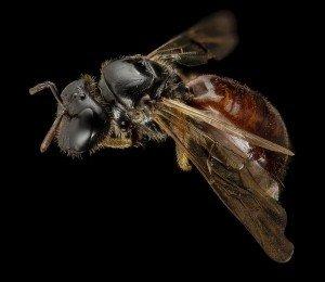 Reed Bee