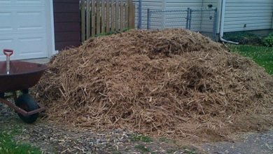 Photo of The Oft-Forgotten Art of Growing Mulch
