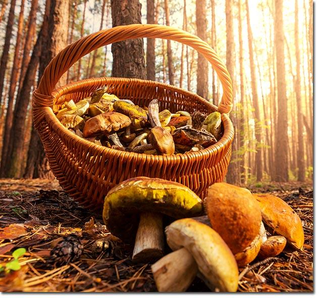 Mushroomsjm01