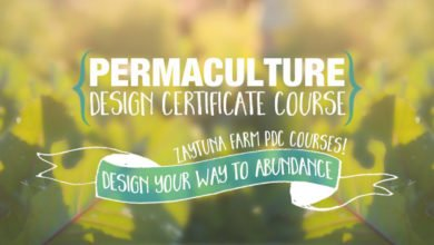Photo of Design Exercises in Permaculture Design Certificate (PDC) Courses
