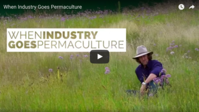 Photo of When Industry Goes Permaculture