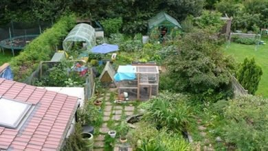 Photo of Free Permaculture Property Designs