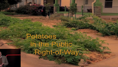 Photo of Growing food, Growing Community