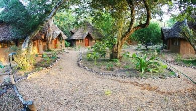 Photo of Permaculture Swaying on the Stunning Emerald Waters of Kilifi, Kenya