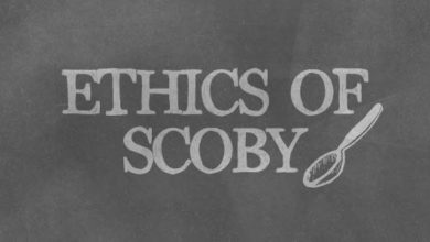 Photo of Permaculture and Kombucha: The Ethics of Scoby
