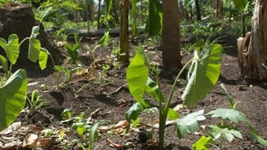 Photo of Permaculture and the Myth of Overpopulation