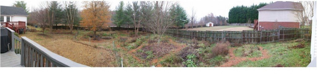Eastern edge of the second/lower swale. Comfrey and French sorrel holding on, with a thick mat of mock strawberries in the background. November 27th, 2013