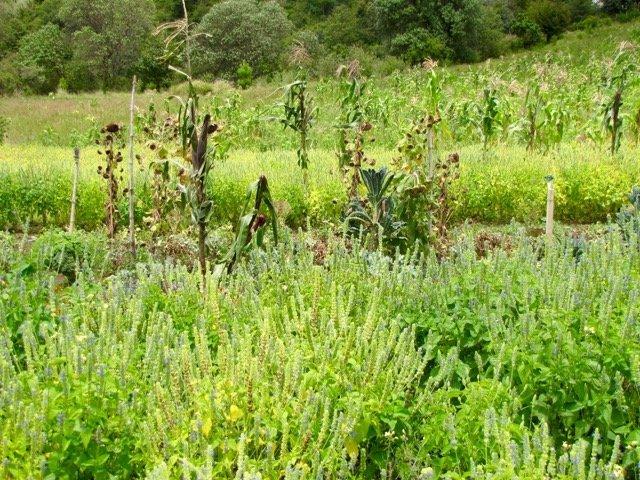 Abundant Fields of Food