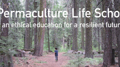 Photo of Permaculture – a real education for children