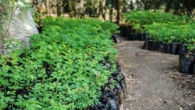 Photo of Ecological enterprises for 727 Kenyan farmers