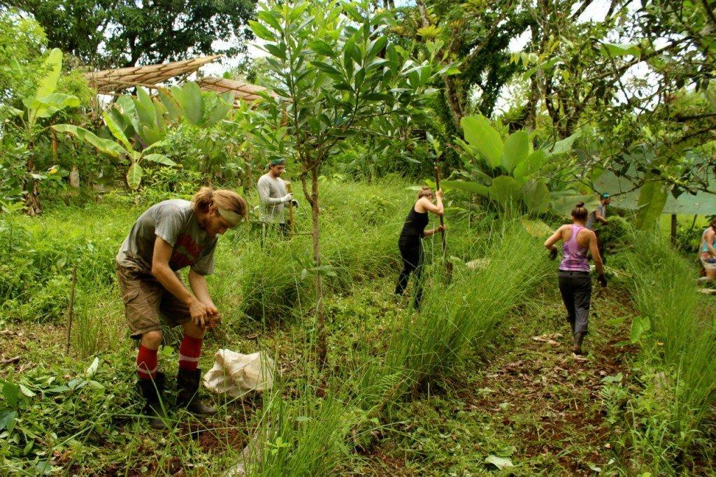 The rainy season work of planting taro.